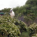 Il dolcissimo e trasparente dono delle nostre api