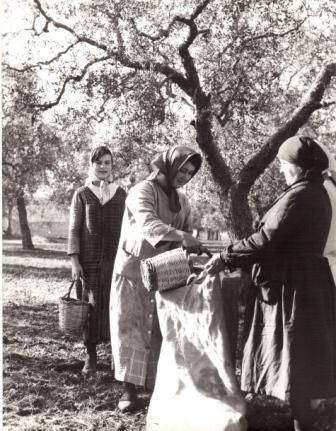 Raccoglievano le ulive una per una da terra for Piani di casa di 1900 piedi quadrati