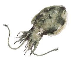 I molluschi di mare fonte di preziosi oligominerali - Pesci comuni in tavola ...