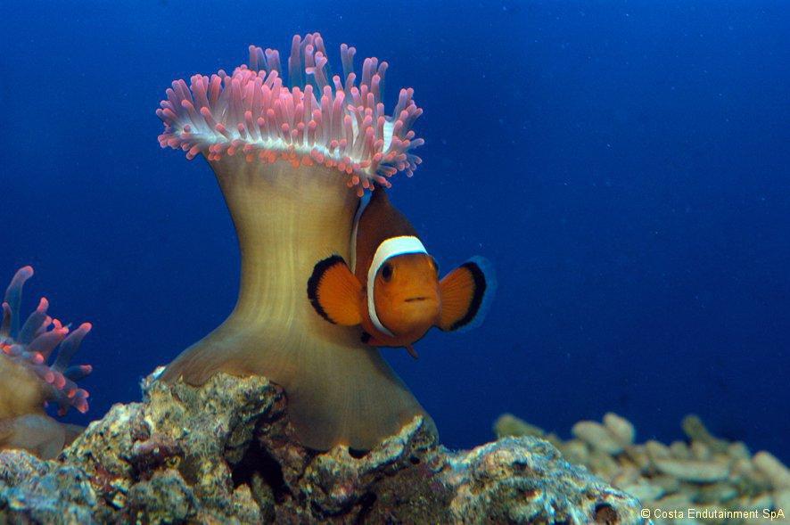 Storia di pallo pesce rosso filosofo fondazione terra d for Comprare pesci